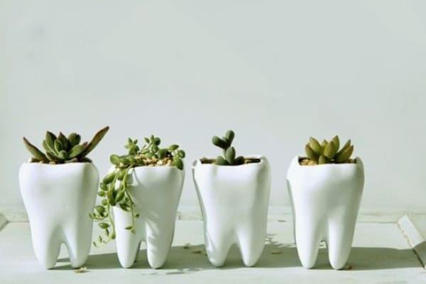 Zobozdravstvo – Andraž Kamnar