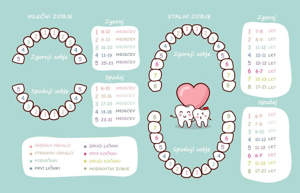 Kdaj zrastejo mlečni in stalni zobje?