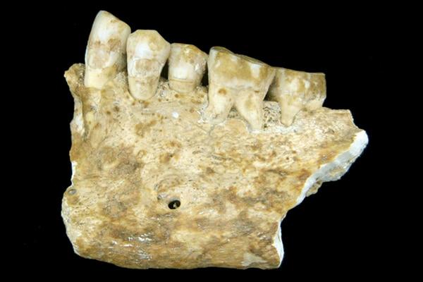 Zalivka, ki je bila najdena na ozemlju Slovenije